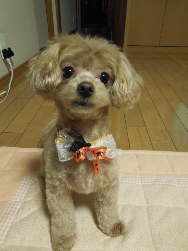 f:id:Ikegamiblog_tokyo:20171029225307j:plain