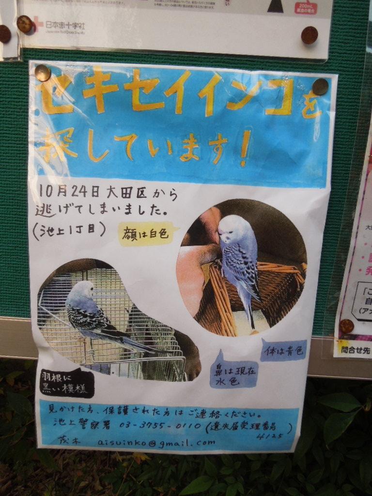 f:id:Ikegamiblog_tokyo:20171107211606j:plain