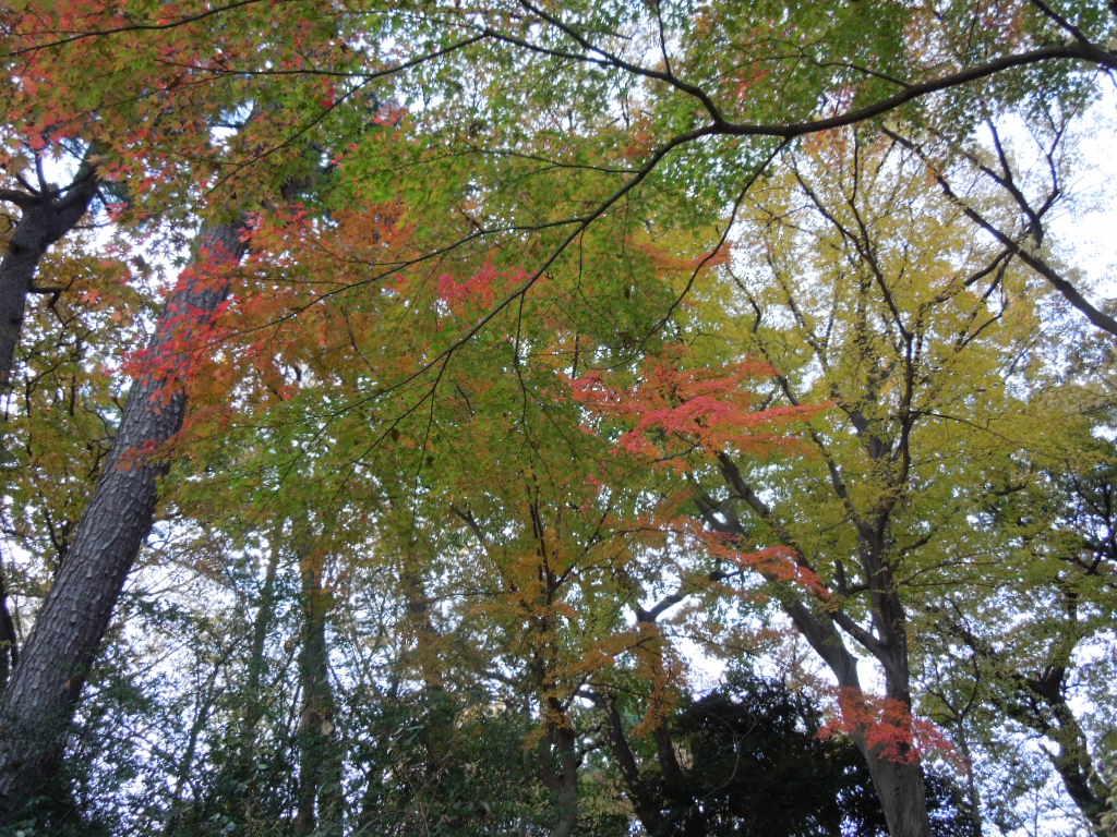 f:id:Ikegamiblog_tokyo:20171128211430j:plain