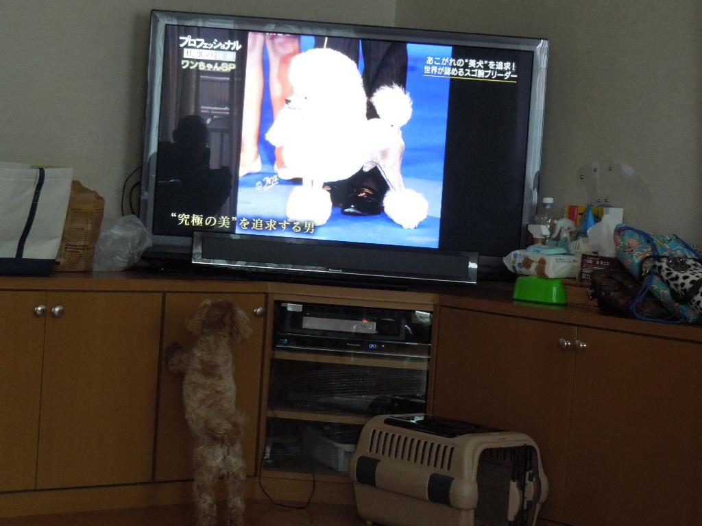 f:id:Ikegamiblog_tokyo:20180204221649j:plain