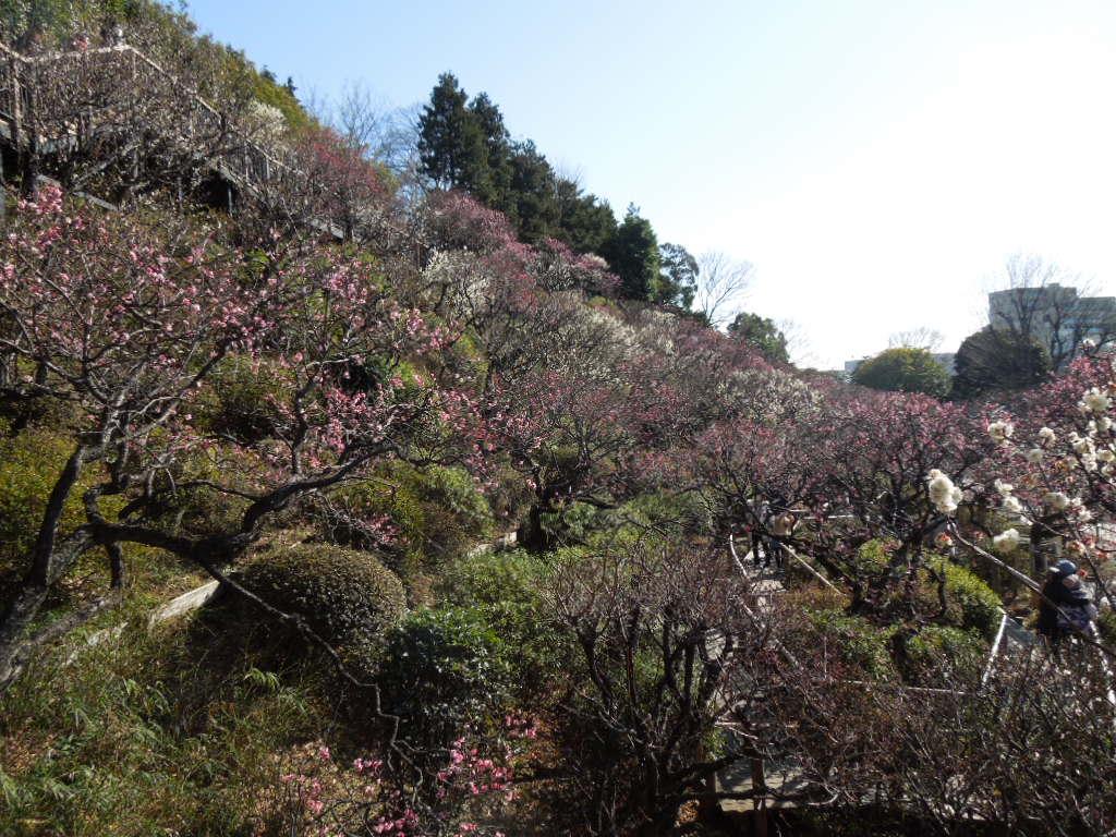 f:id:Ikegamiblog_tokyo:20180218163420j:plain