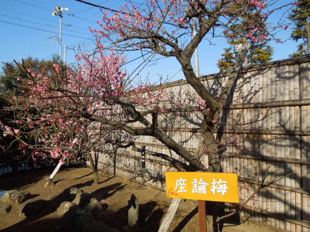 f:id:Ikegamiblog_tokyo:20180218164427j:plain