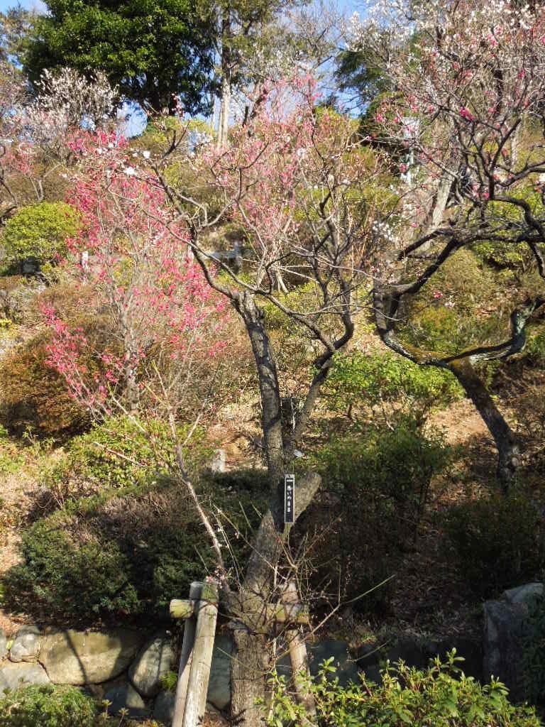 f:id:Ikegamiblog_tokyo:20180218164936j:plain