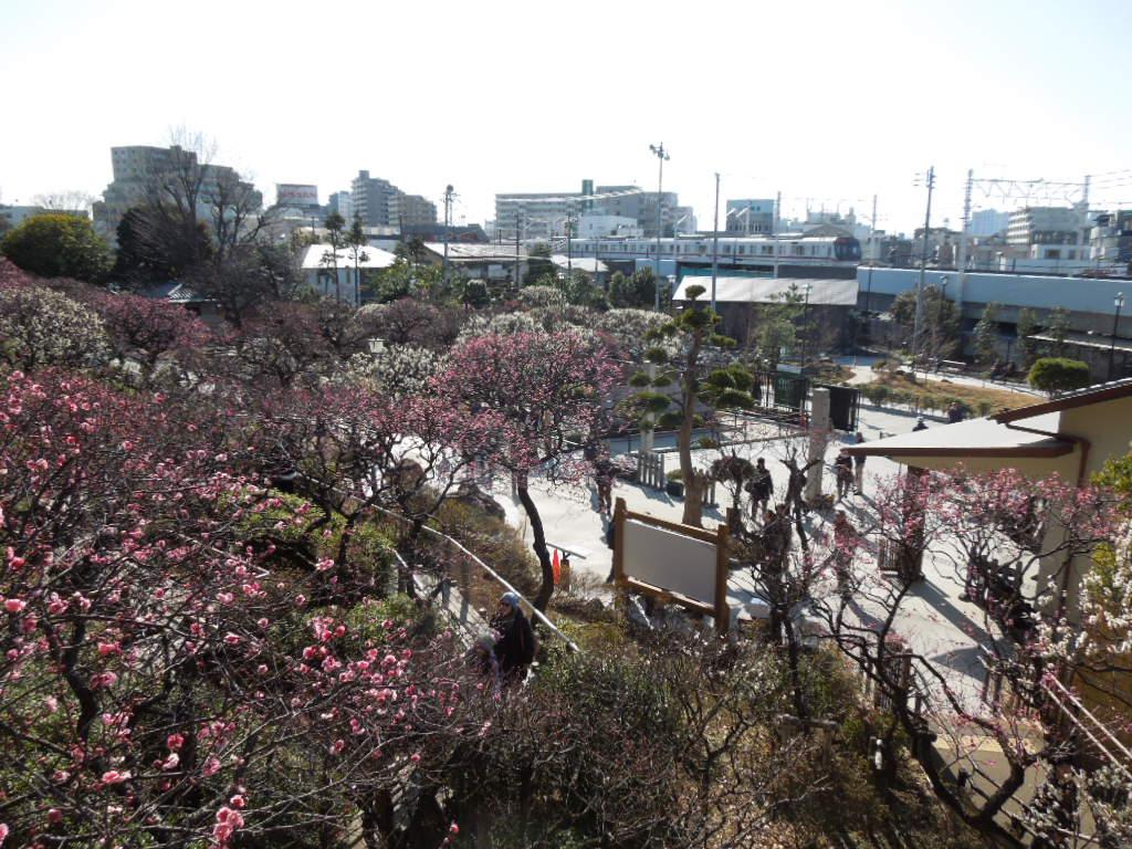 f:id:Ikegamiblog_tokyo:20180218201720j:plain