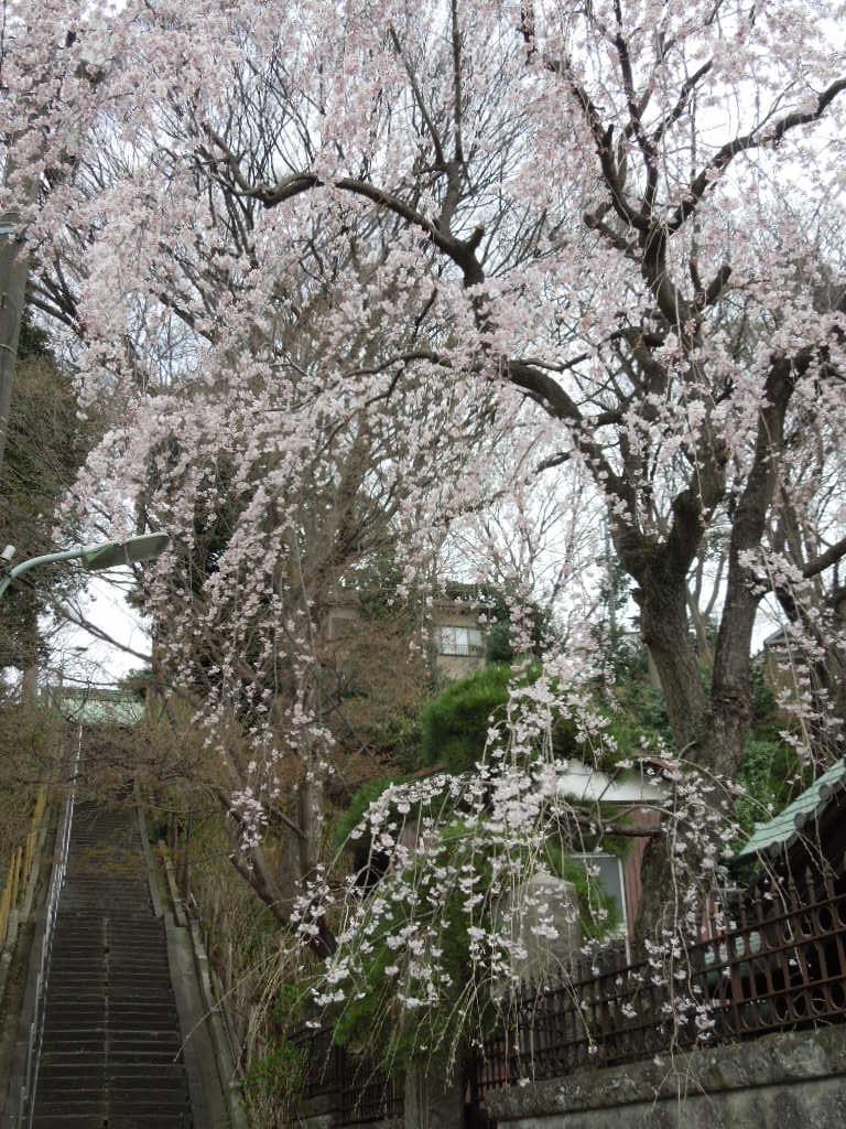 f:id:Ikegamiblog_tokyo:20180318223758j:plain