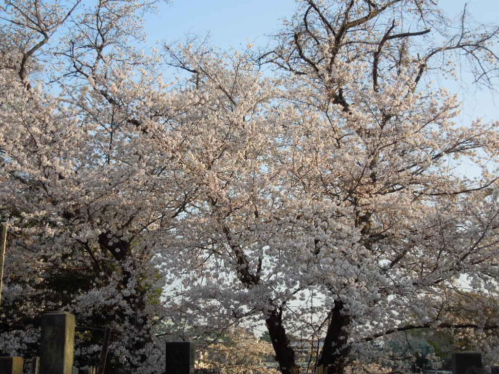 f:id:Ikegamiblog_tokyo:20180327221827j:plain