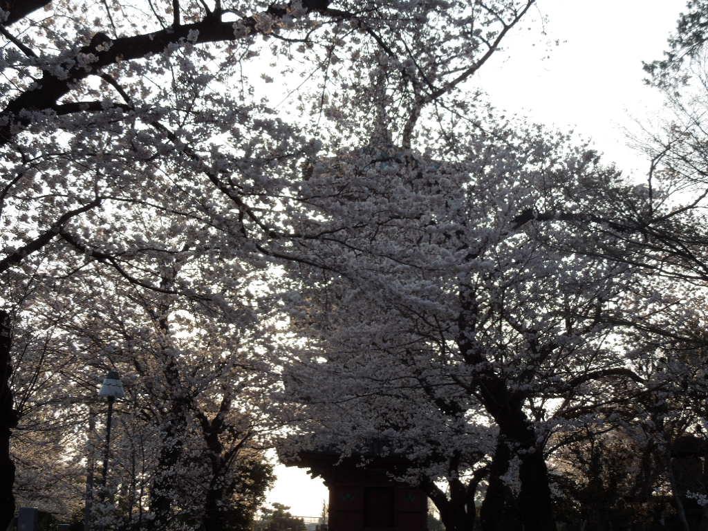 f:id:Ikegamiblog_tokyo:20180327221857j:plain