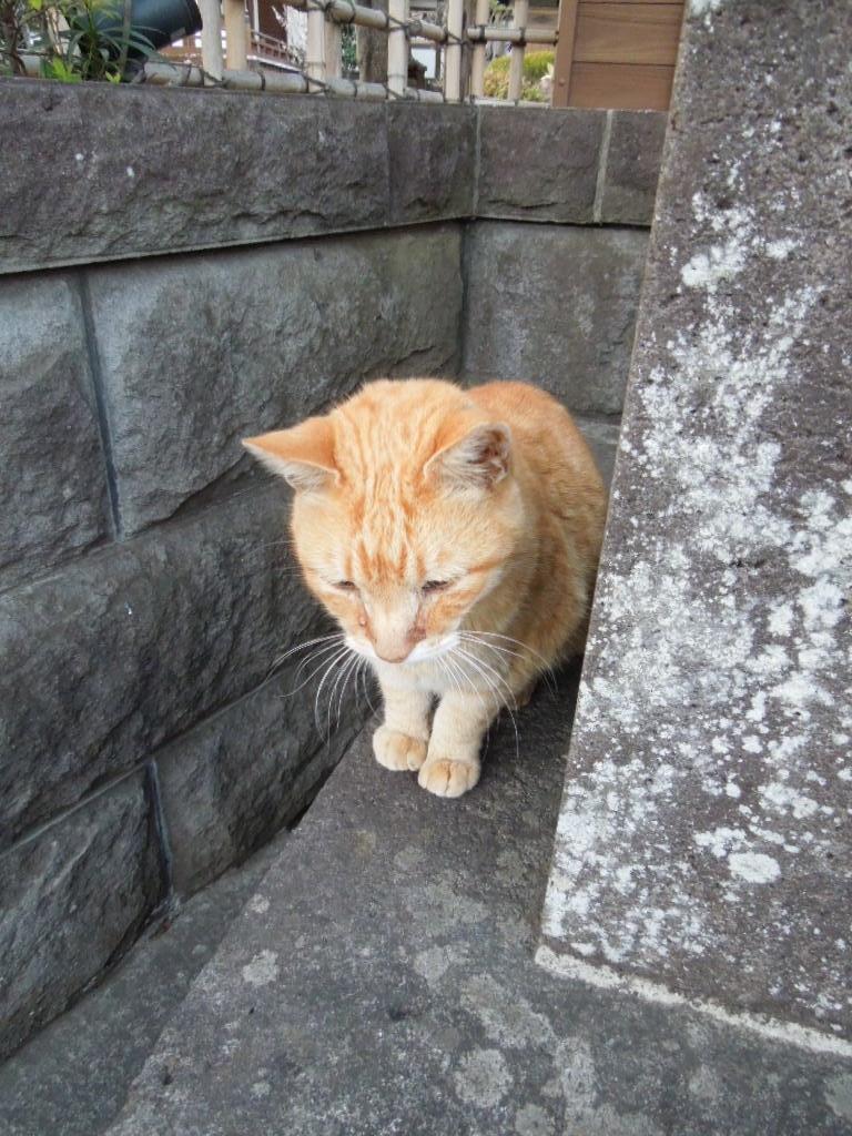 f:id:Ikegamiblog_tokyo:20180401212050j:plain
