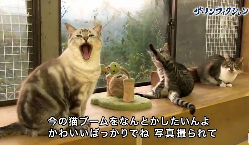 f:id:Ikegamiblog_tokyo:20180610221932j:plain