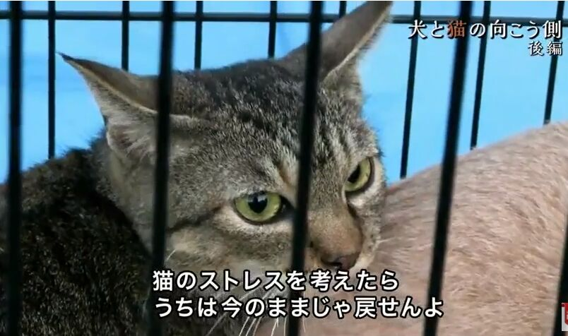 f:id:Ikegamiblog_tokyo:20180610221950j:plain