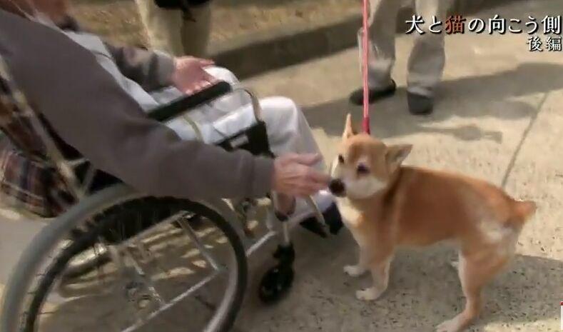 f:id:Ikegamiblog_tokyo:20180610222332j:plain