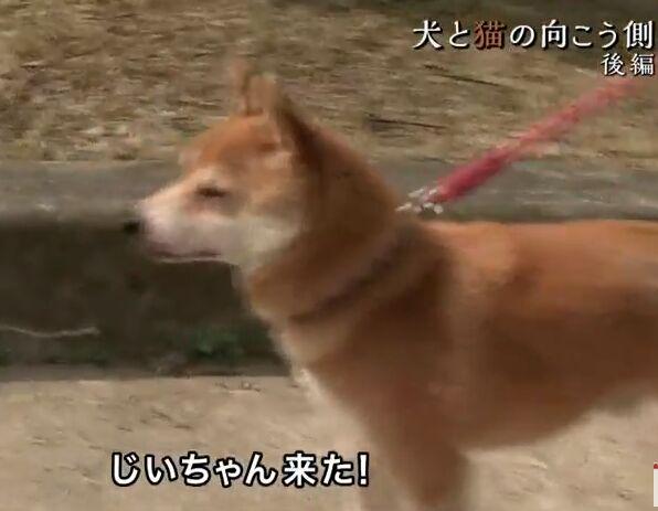 f:id:Ikegamiblog_tokyo:20180610222406j:plain