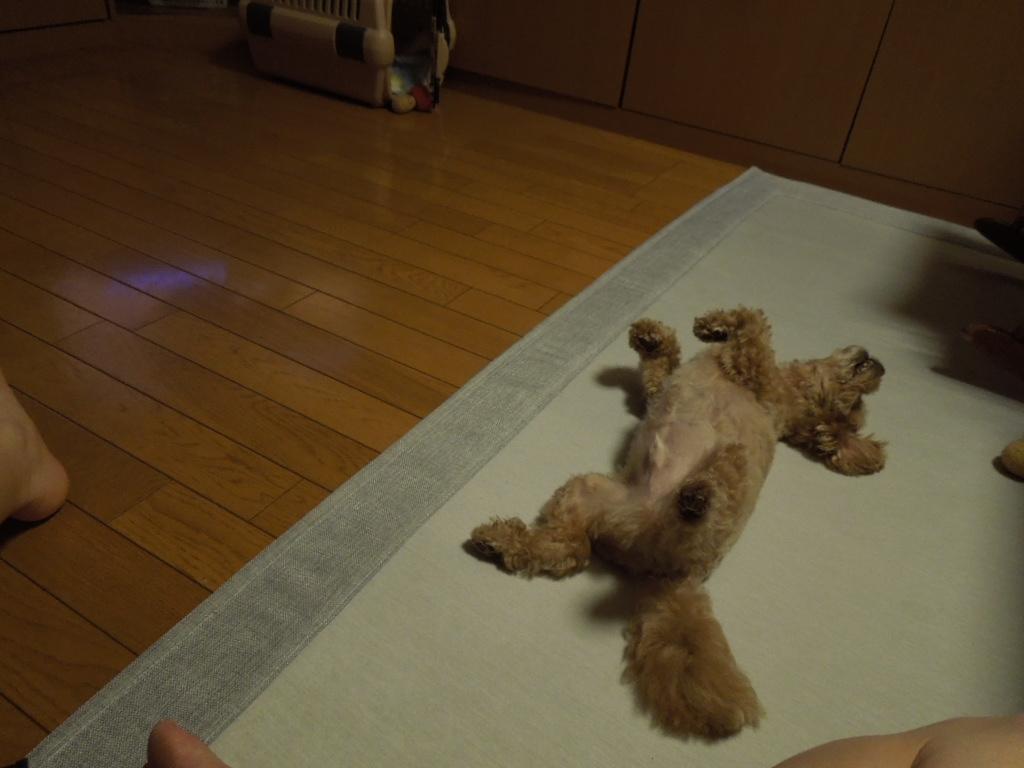 f:id:Ikegamiblog_tokyo:20180727221021j:plain