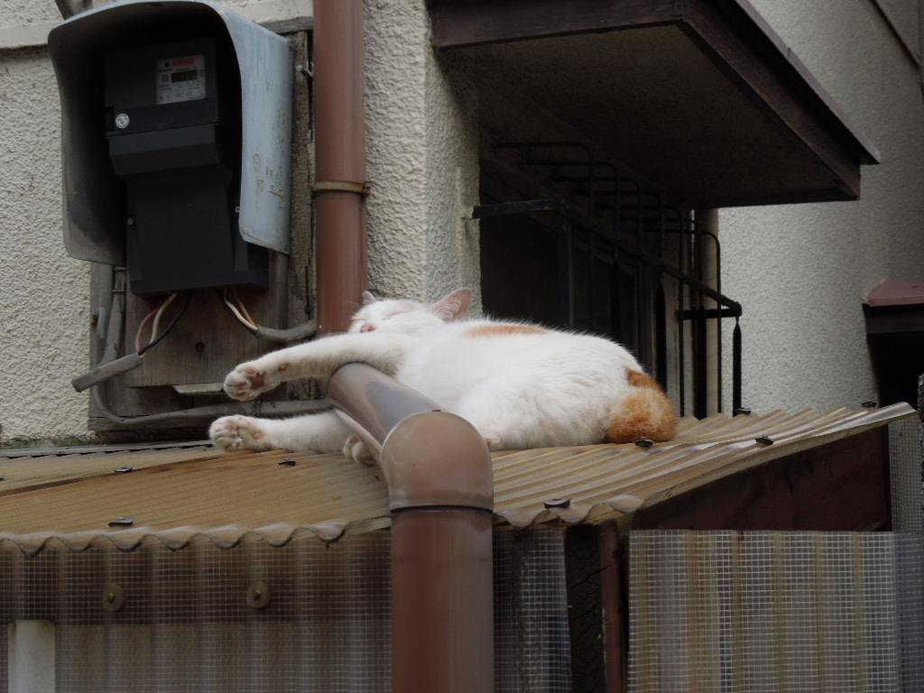 f:id:Ikegamiblog_tokyo:20180728170324j:plain