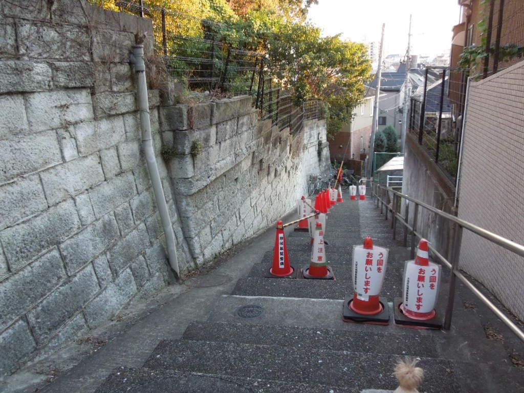 f:id:Ikegamiblog_tokyo:20181104222613j:plain