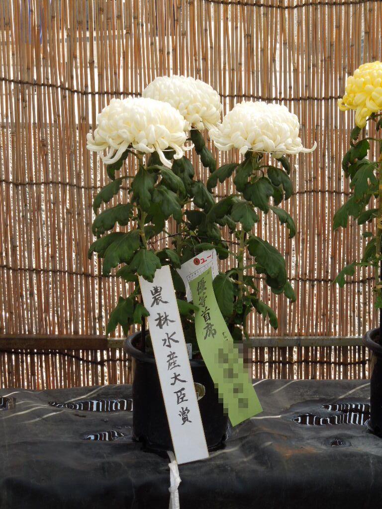 f:id:Ikegamiblog_tokyo:20181112213831j:plain