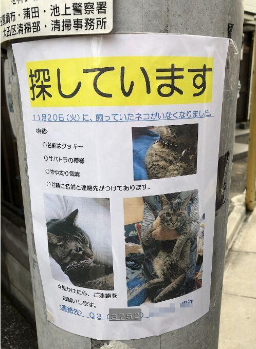 f:id:Ikegamiblog_tokyo:20181128123811j:plain