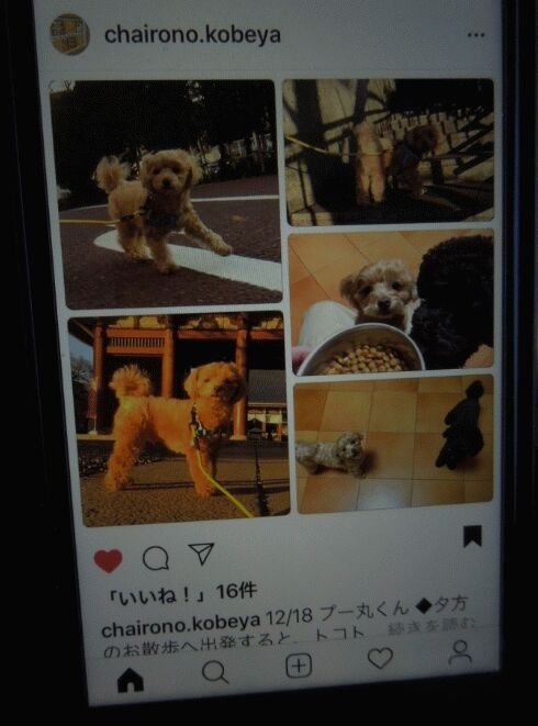 f:id:Ikegamiblog_tokyo:20181229002554j:plain