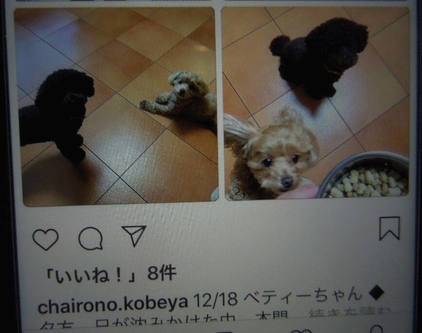 f:id:Ikegamiblog_tokyo:20181229002612j:plain