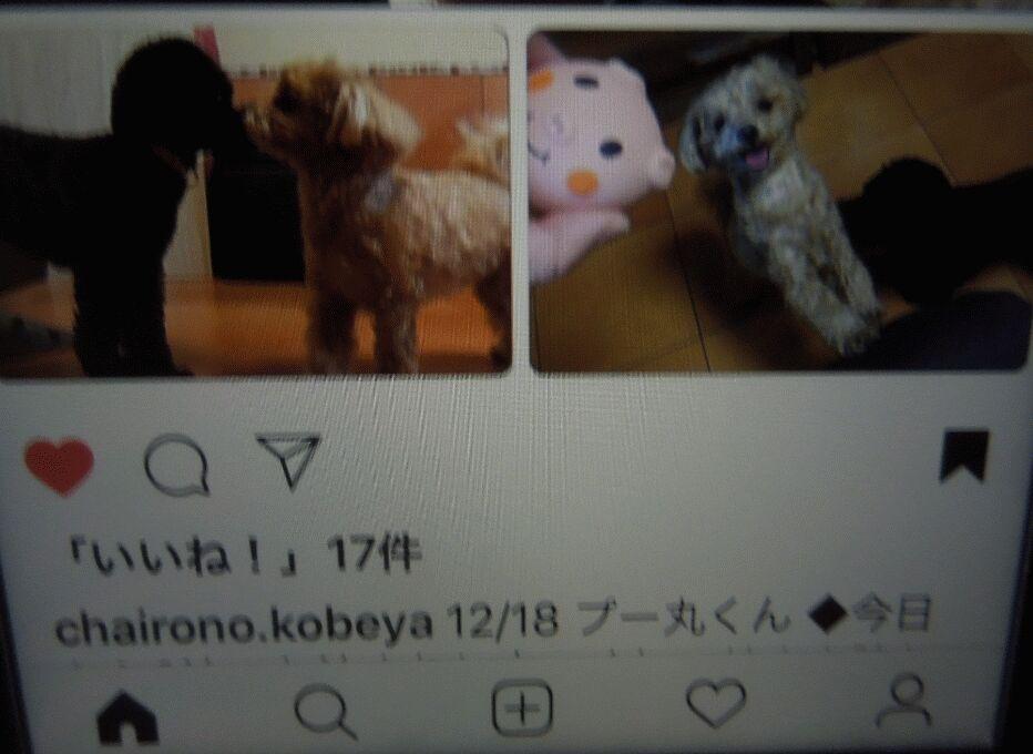 f:id:Ikegamiblog_tokyo:20181229002628j:plain