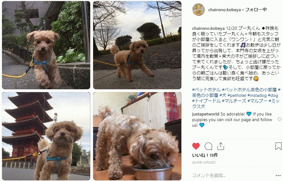 f:id:Ikegamiblog_tokyo:20190102114754j:plain