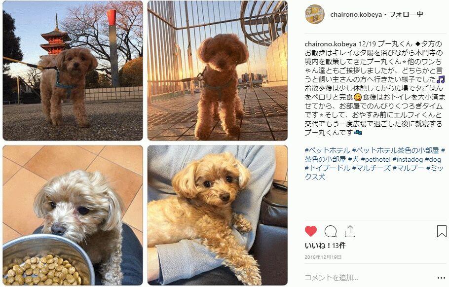 f:id:Ikegamiblog_tokyo:20190102114944j:plain