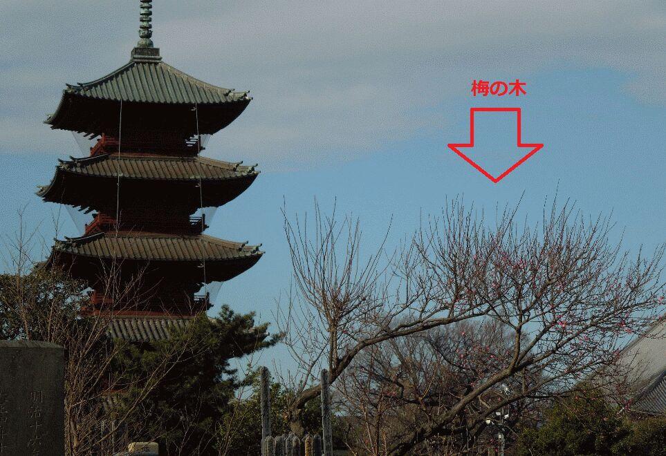 f:id:Ikegamiblog_tokyo:20190117091816j:plain