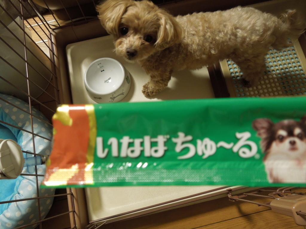 f:id:Ikegamiblog_tokyo:20190130230730j:plain