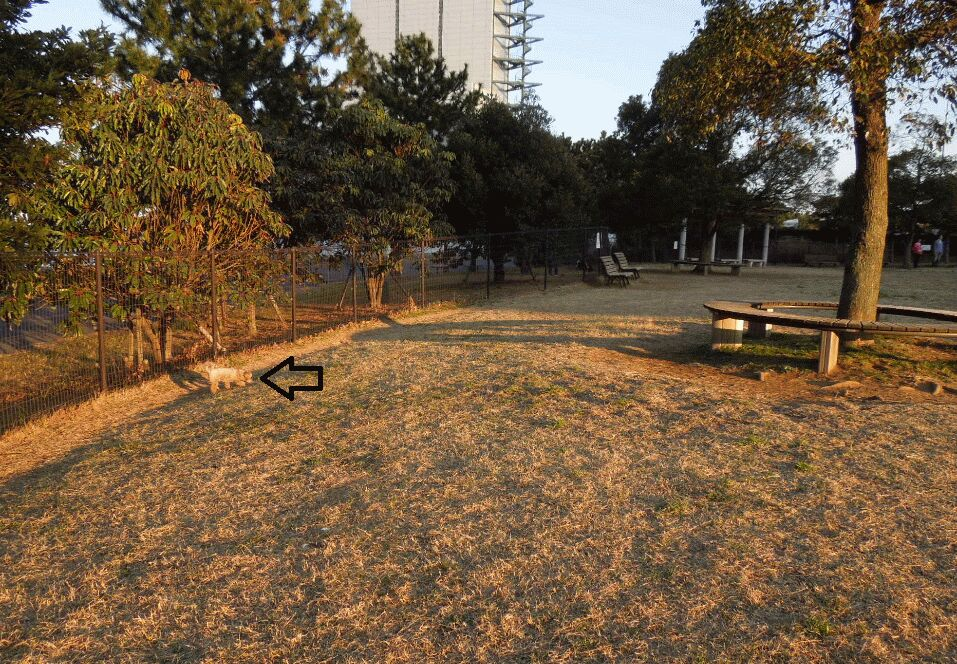 f:id:Ikegamiblog_tokyo:20190217224624j:plain