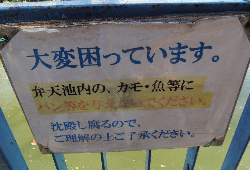f:id:Ikegamiblog_tokyo:20190220111031j:plain