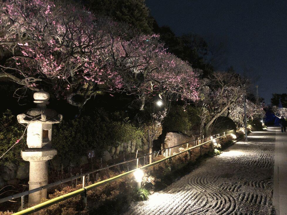 f:id:Ikegamiblog_tokyo:20190227002114j:plain