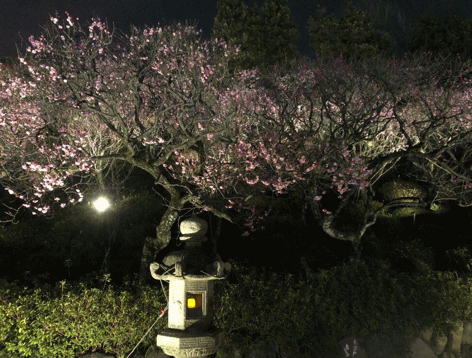 f:id:Ikegamiblog_tokyo:20190227002448j:plain