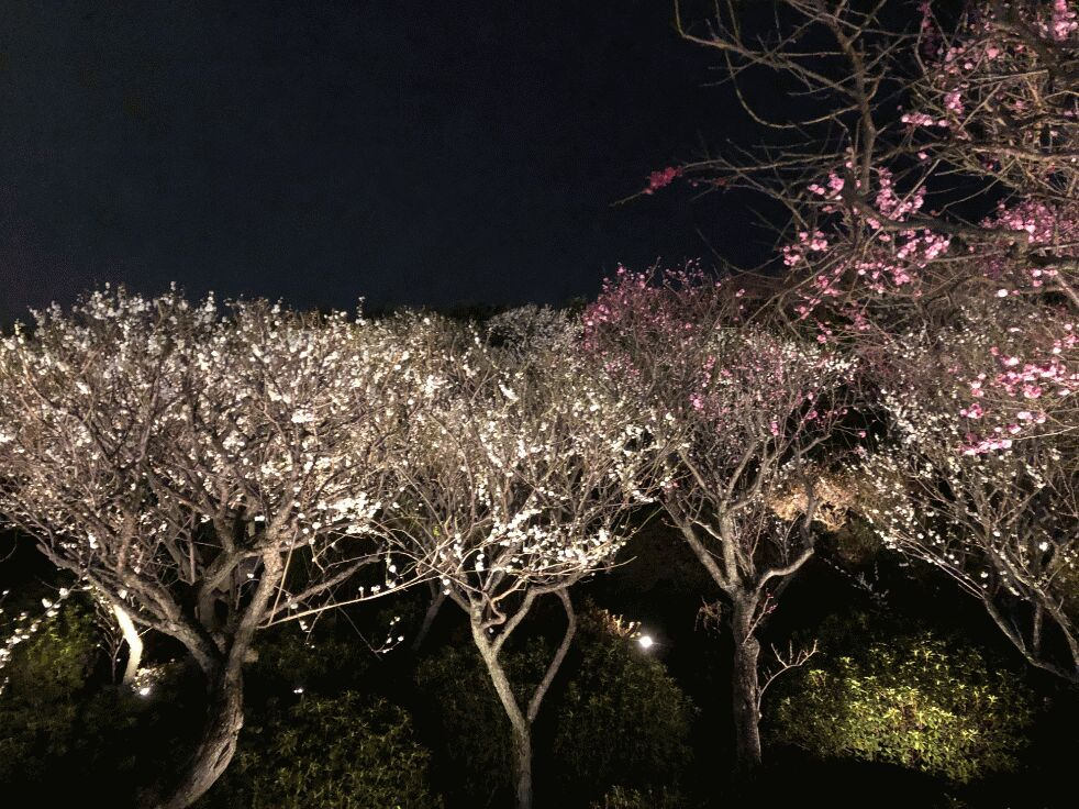 f:id:Ikegamiblog_tokyo:20190227002700j:plain