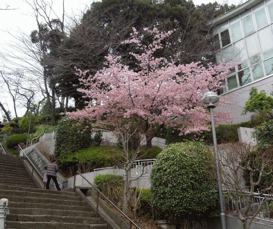 f:id:Ikegamiblog_tokyo:20190228145703j:plain