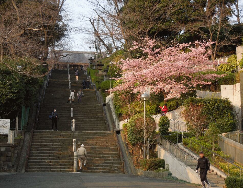 f:id:Ikegamiblog_tokyo:20190228150155j:plain