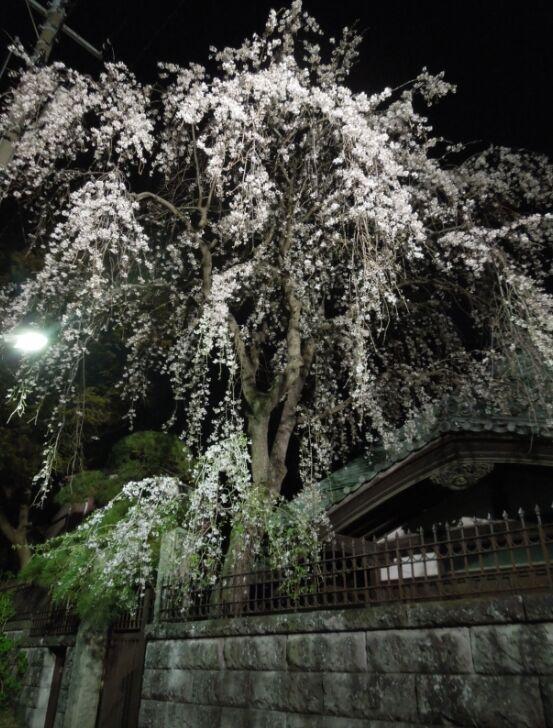 f:id:Ikegamiblog_tokyo:20190326230621j:plain