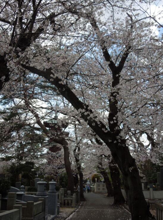 f:id:Ikegamiblog_tokyo:20190402152332j:plain