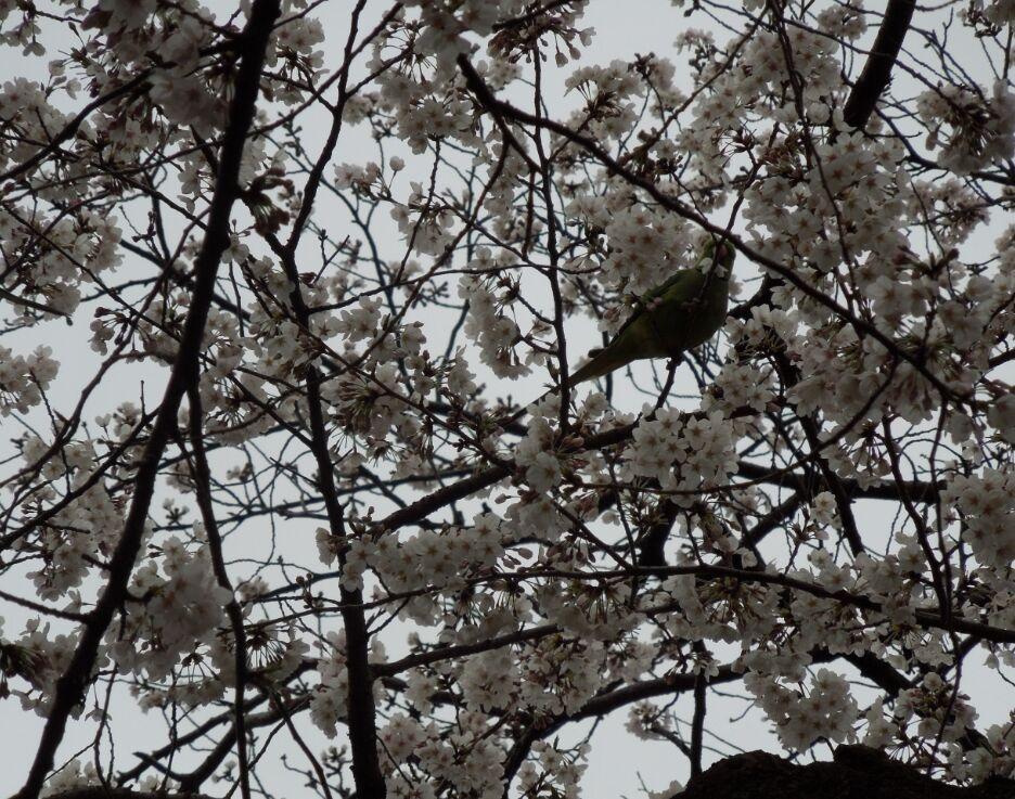 f:id:Ikegamiblog_tokyo:20190402152433j:plain