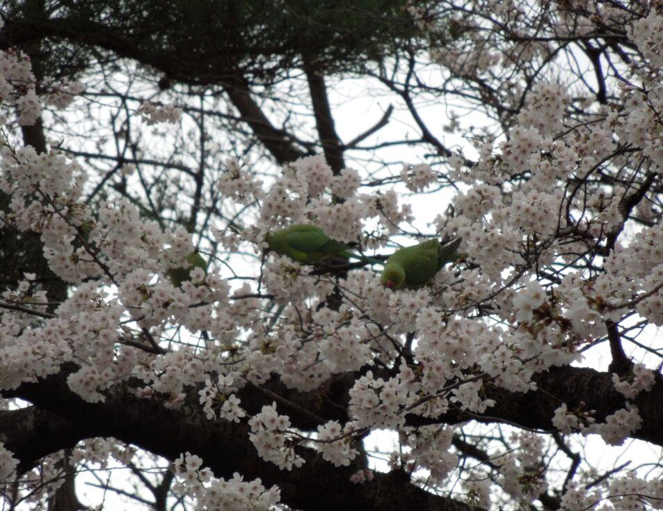 f:id:Ikegamiblog_tokyo:20190402152450j:plain