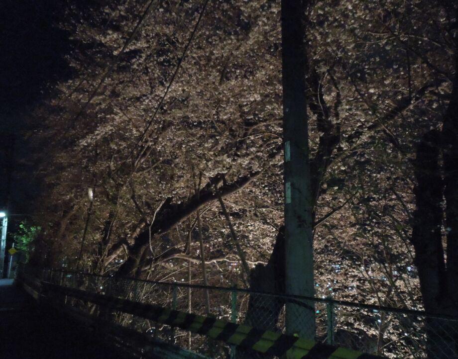 f:id:Ikegamiblog_tokyo:20190402195352j:plain