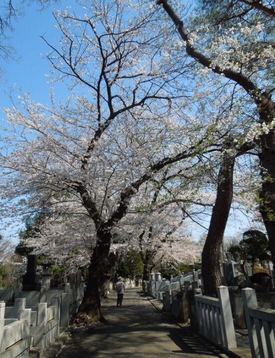 f:id:Ikegamiblog_tokyo:20190403143005j:plain