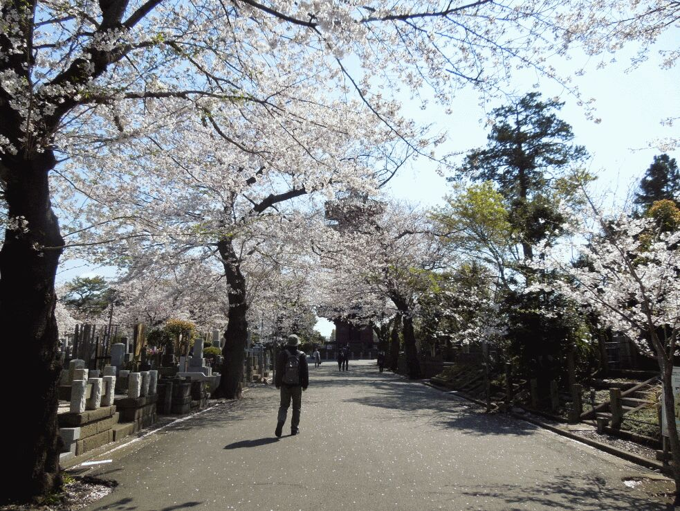 f:id:Ikegamiblog_tokyo:20190403143729j:plain