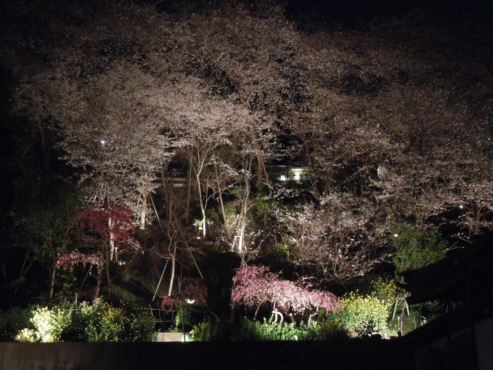 f:id:Ikegamiblog_tokyo:20190405144824j:plain