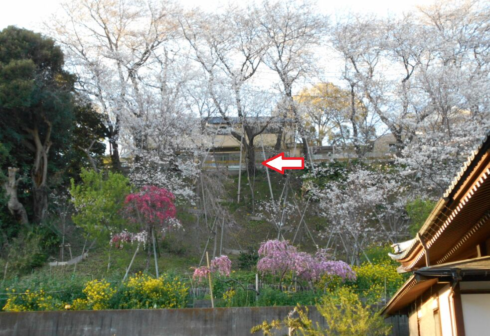 f:id:Ikegamiblog_tokyo:20190405150445j:plain