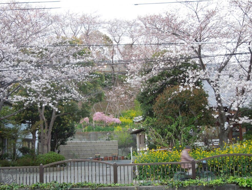 f:id:Ikegamiblog_tokyo:20190405151246j:plain