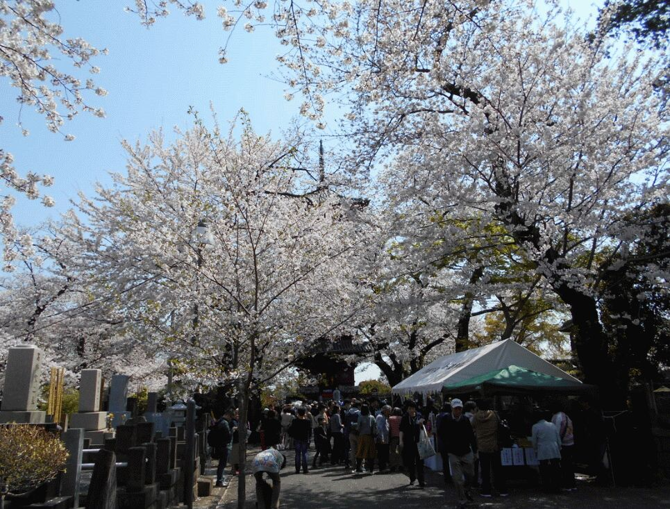 f:id:Ikegamiblog_tokyo:20190406201345j:plain