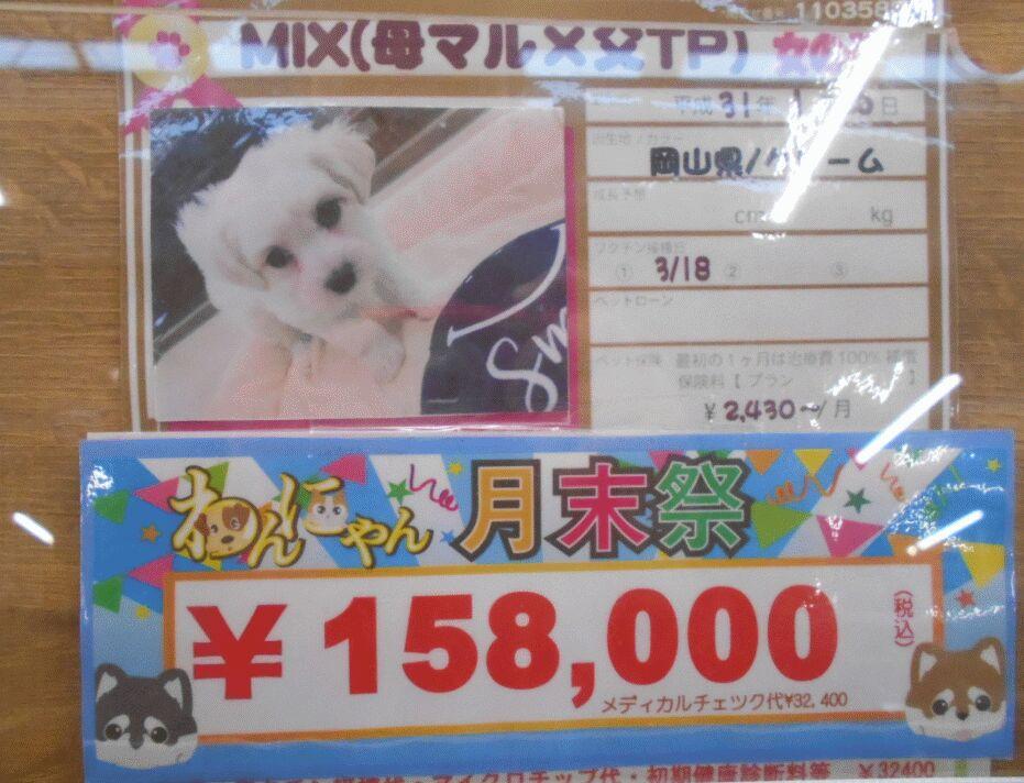 f:id:Ikegamiblog_tokyo:20190424234139j:plain