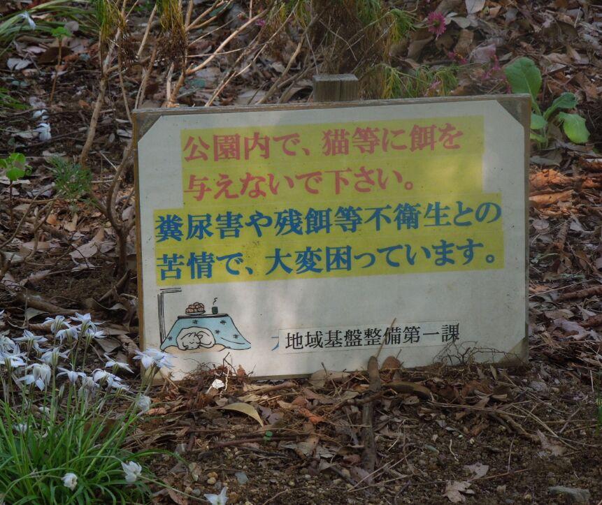 f:id:Ikegamiblog_tokyo:20190425074144j:plain