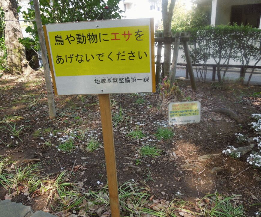 f:id:Ikegamiblog_tokyo:20190425074405j:plain