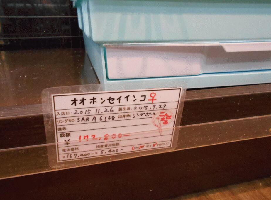 f:id:Ikegamiblog_tokyo:20190425122618j:plain